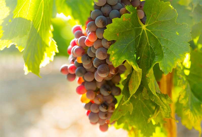 Les métiers de la vigne et du vin