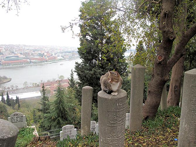 Istanbul ne serait plus la même sans ses chats !