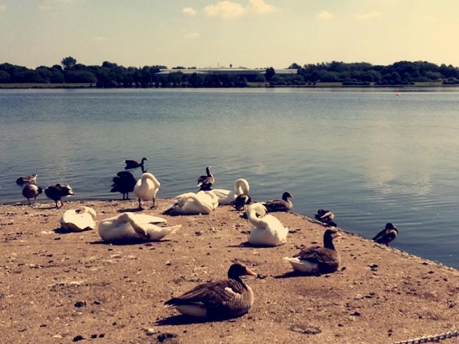 Willen Lake à Milton Keynes.